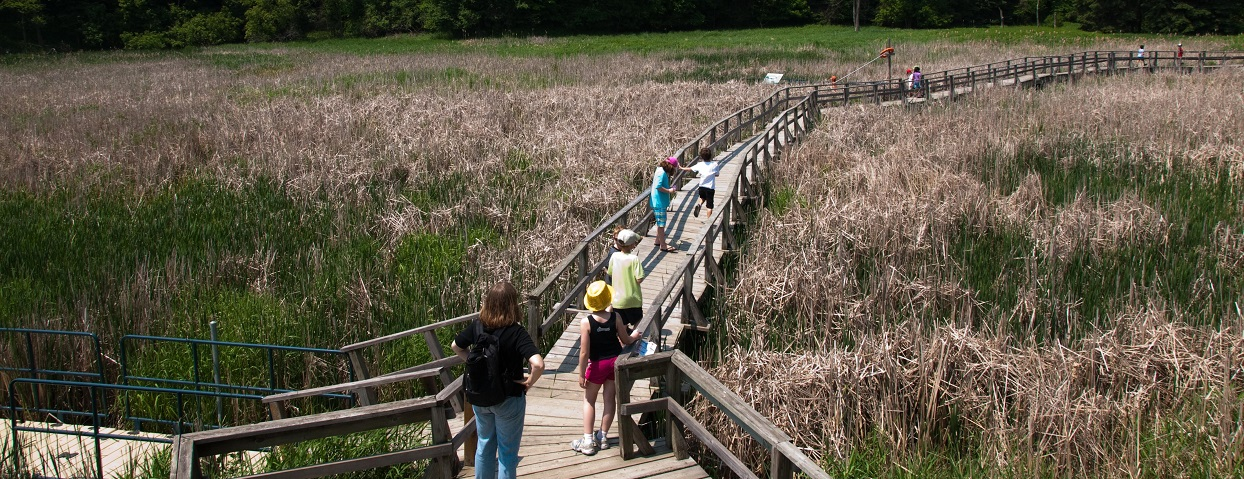 aerial view of boardwalk at Kortright Centre