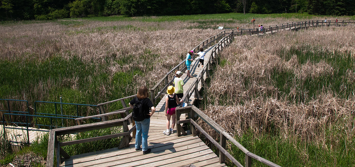 students on the boardwalk at Kortright Centre
