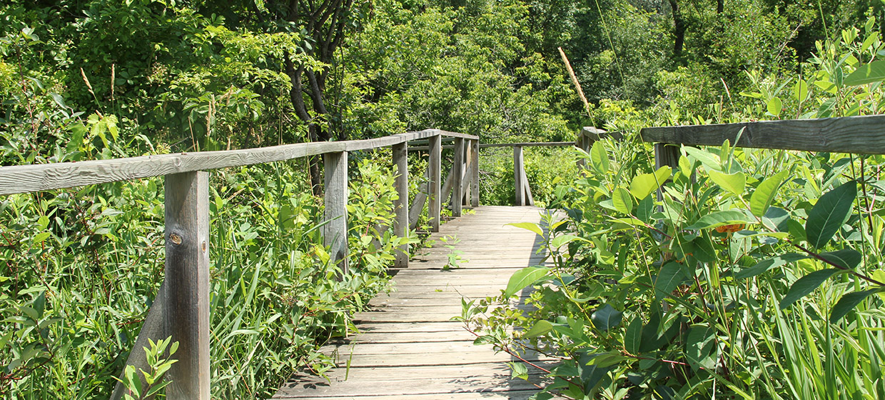 wooden boardwalk at Kortright Centre
