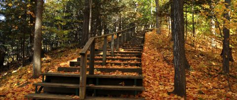 fall colours at Kortright Centre