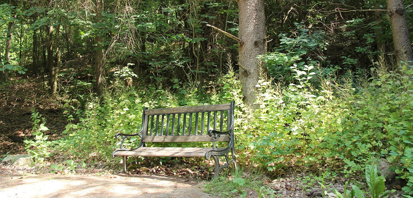 bench on forest path at Kortright Centre