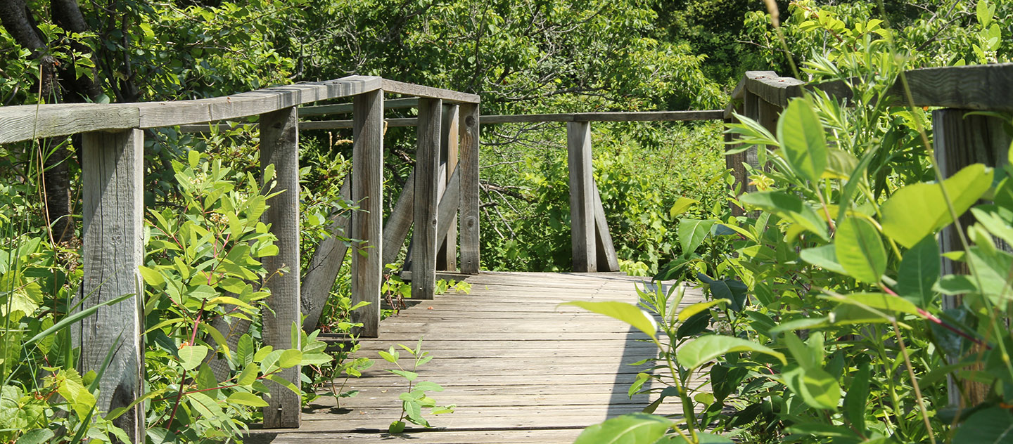 boardwalk at Kortright Centre for Conservation