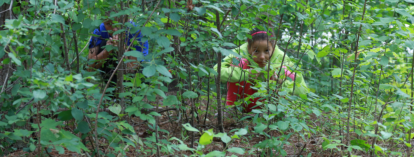 children use forest camouflage to hide at Kortright Centre survival camp