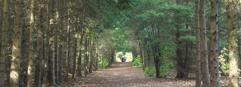 trail at Kortright Centre