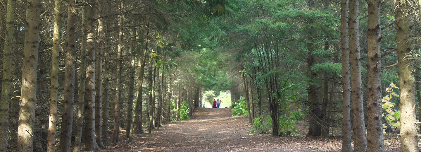 Workshop: Tree Identification @ Kortright Centre for Conservation