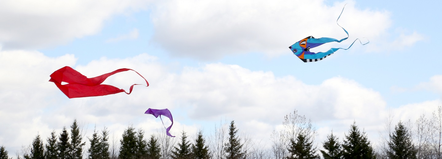 kites flying over Kortright Centre