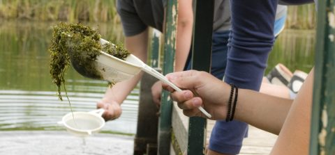 students conduct pond study at Kortright Centre