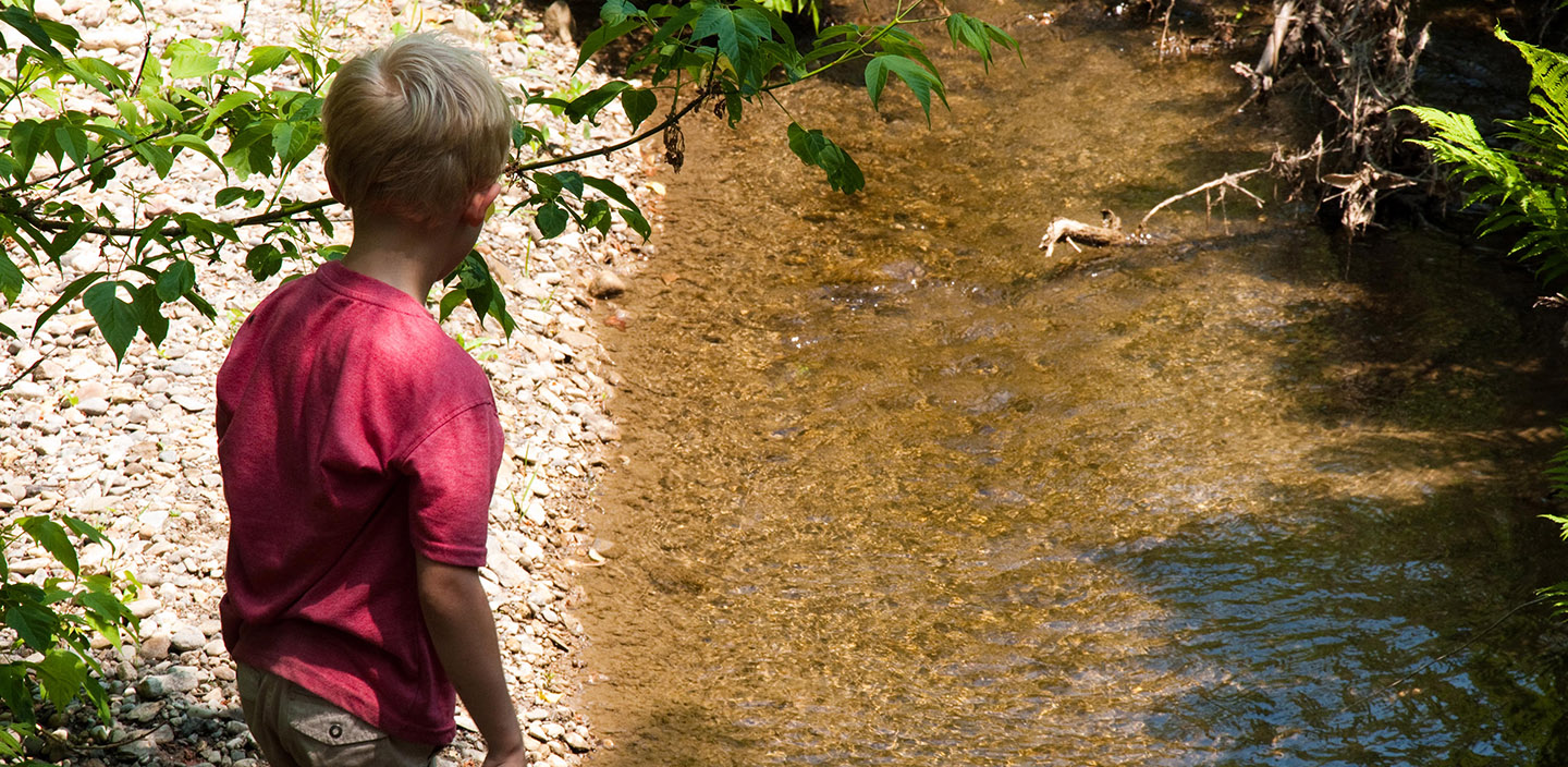 young boy explores stream at Kortright Centre