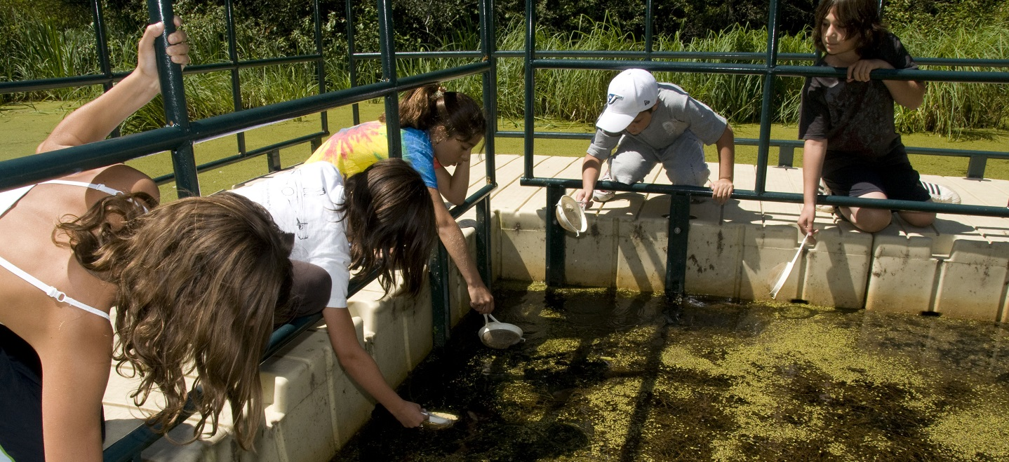 students dip for invertebrates at Kortright Centre wetland