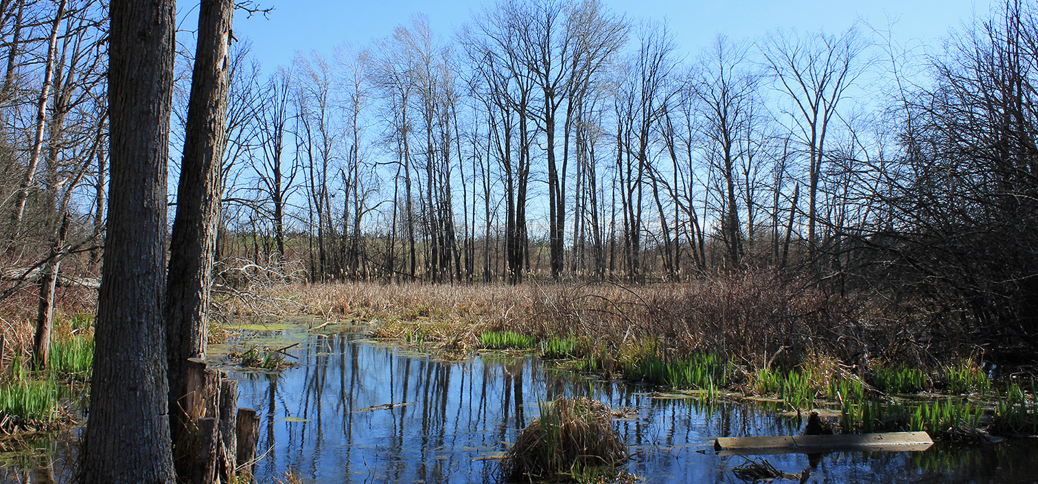 wetland area at Kortright Centre