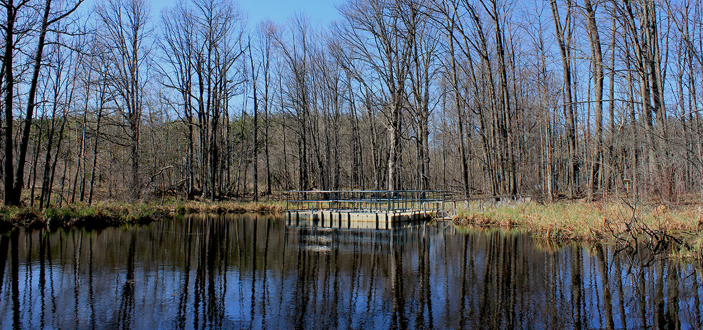pond at Kortright Centre