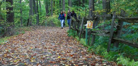 women enjoy forest therapy walk at Kortright Centre