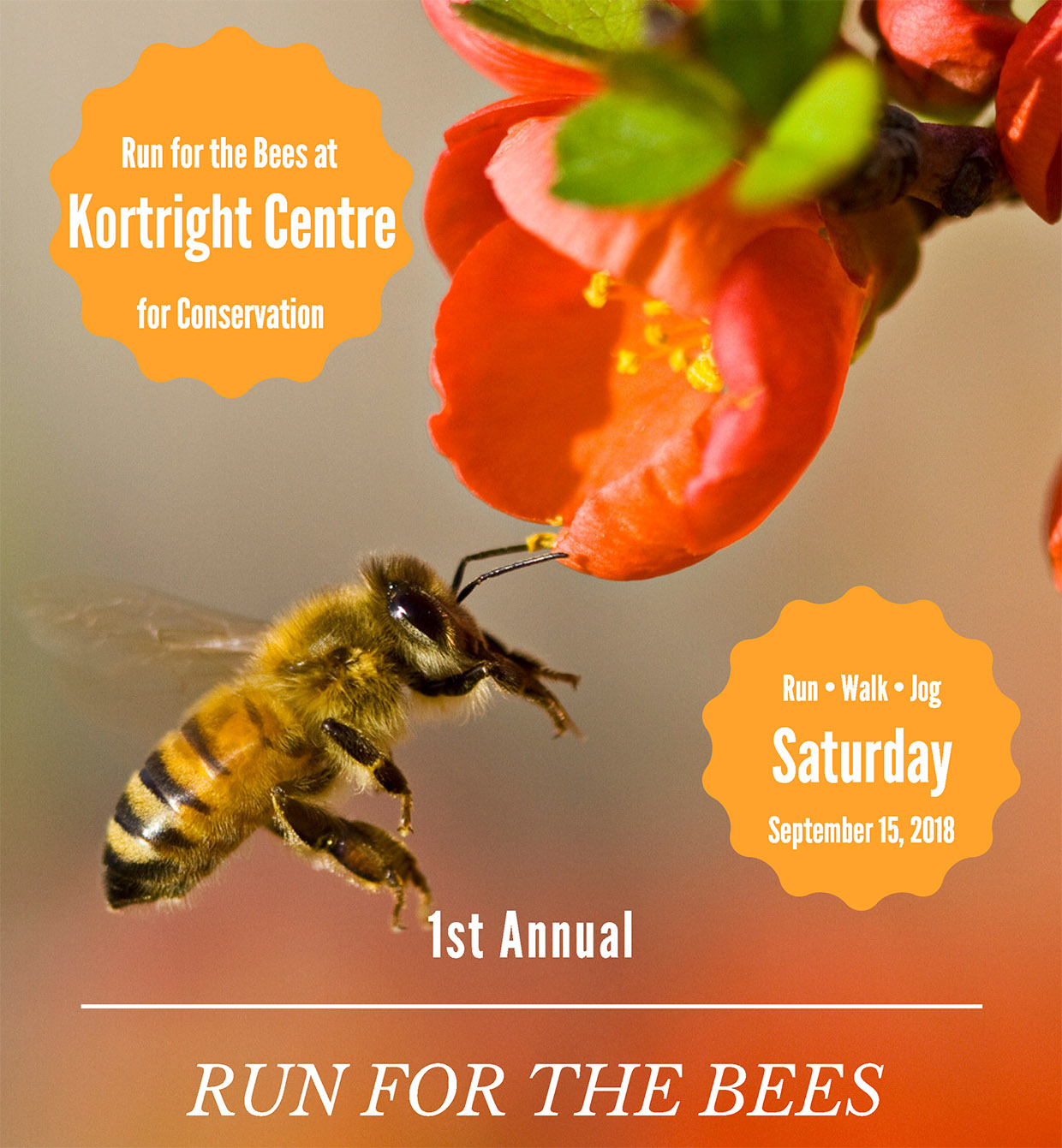 Run for the Bees poster