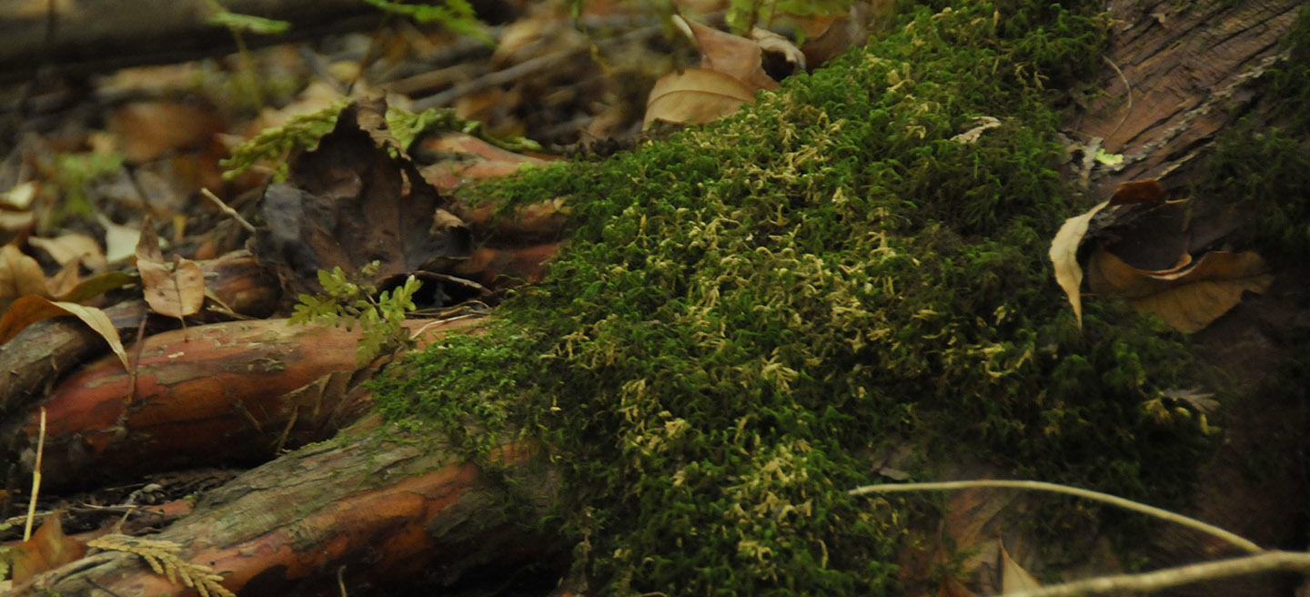 Workshop: Mosses and Liverworts @ Kortright Centre for Conservation
