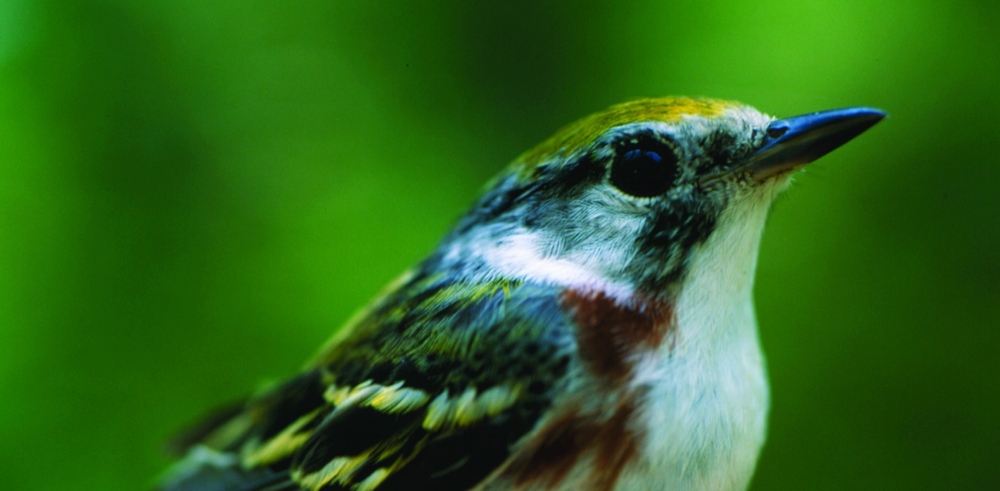 Workshop: Warblers @ Kortright Centre for Conservation