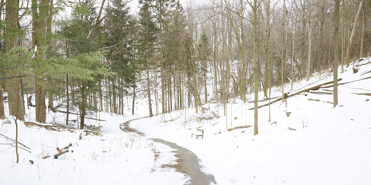 forest trail at Kortright Centre in winter