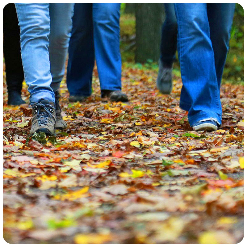 women walking through autumn leaves at Kortright Centre