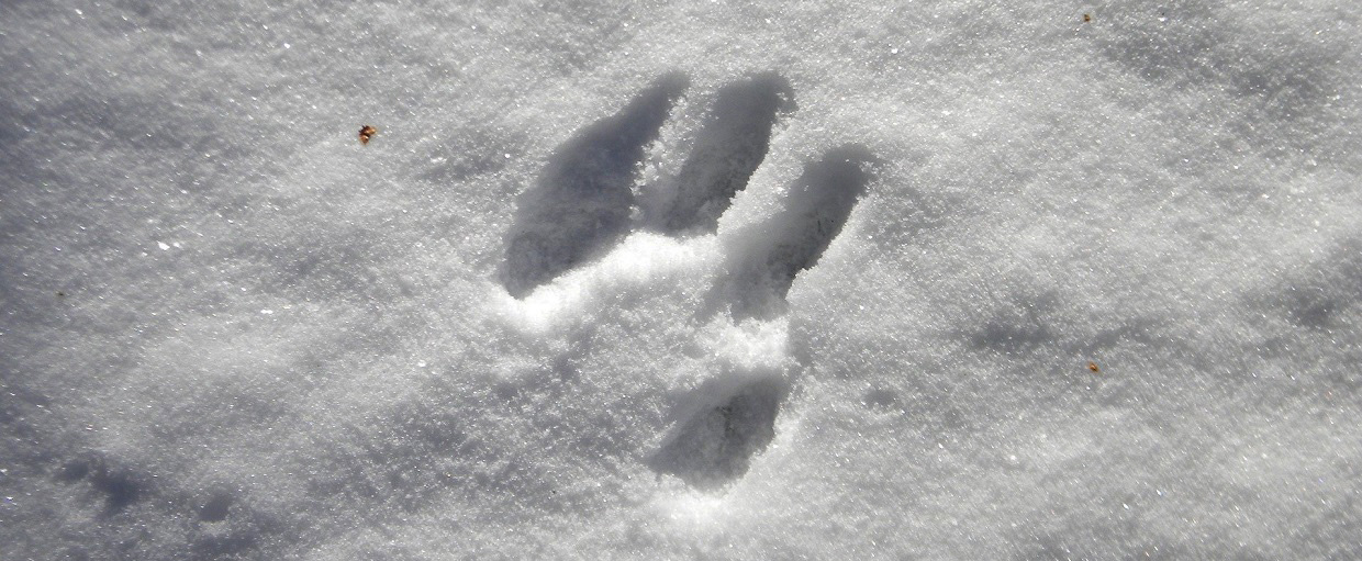 Workshop: Animal Tracking (Winter) @ Kortright Centre for Conservation
