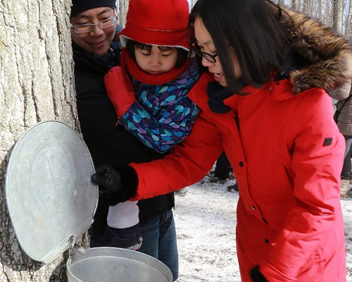 young family learns about tree tapping techniques during maple syrup festival at Kortright Centre
