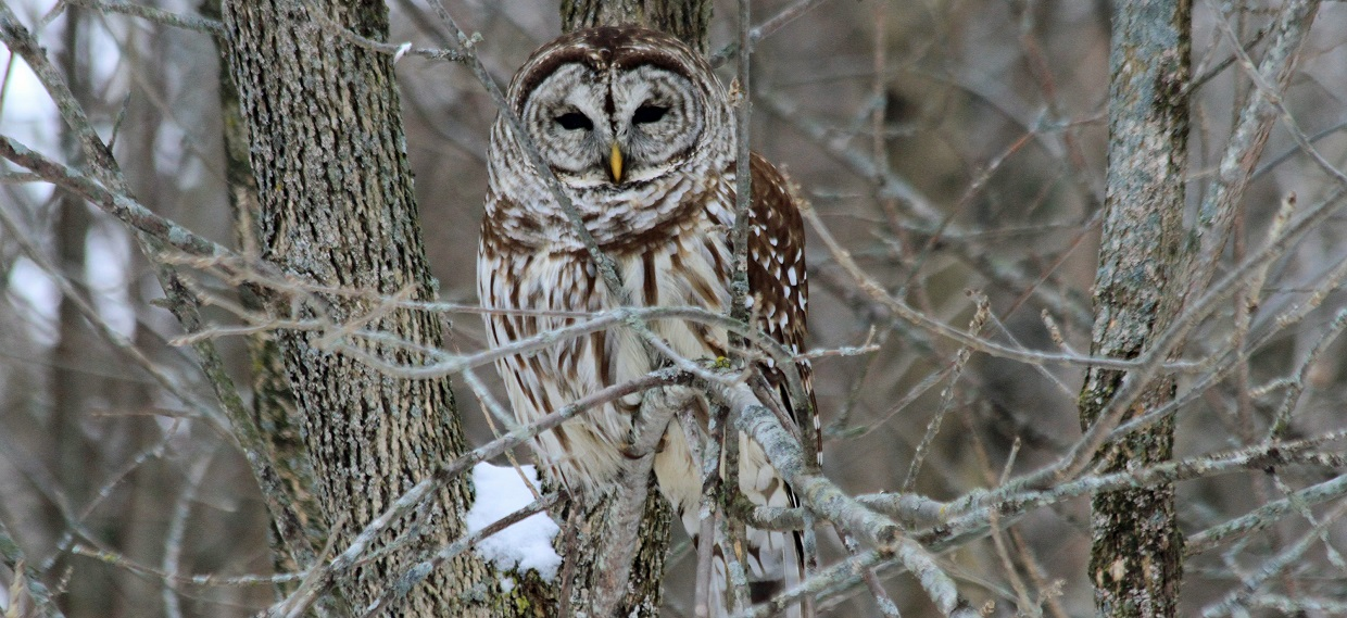 Owl Prowl @ Kortright Centre for Conservation