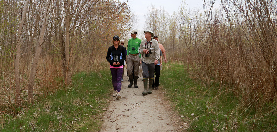Birding by Ear: Learning to Hear the Avian Landscape @ Tommy Thompson Park
