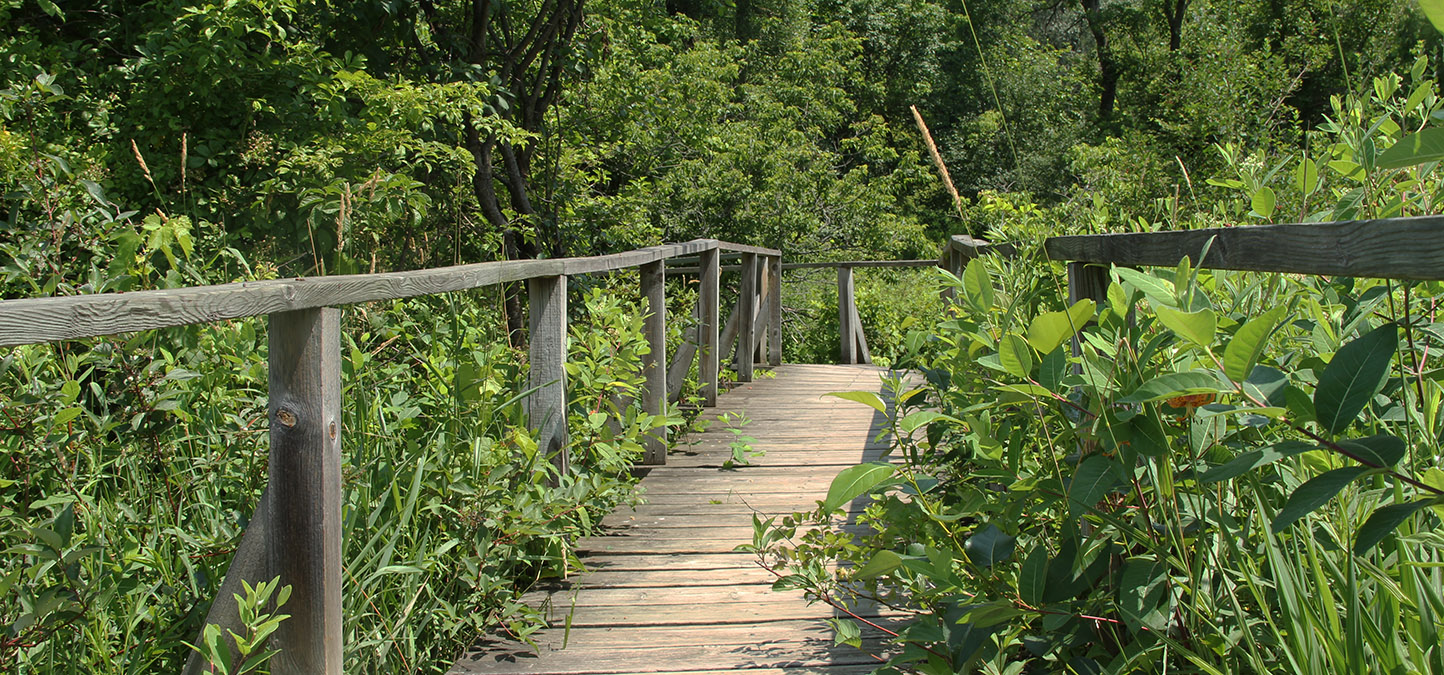 forest trail boardwalk at Kortright Centre for Conservation