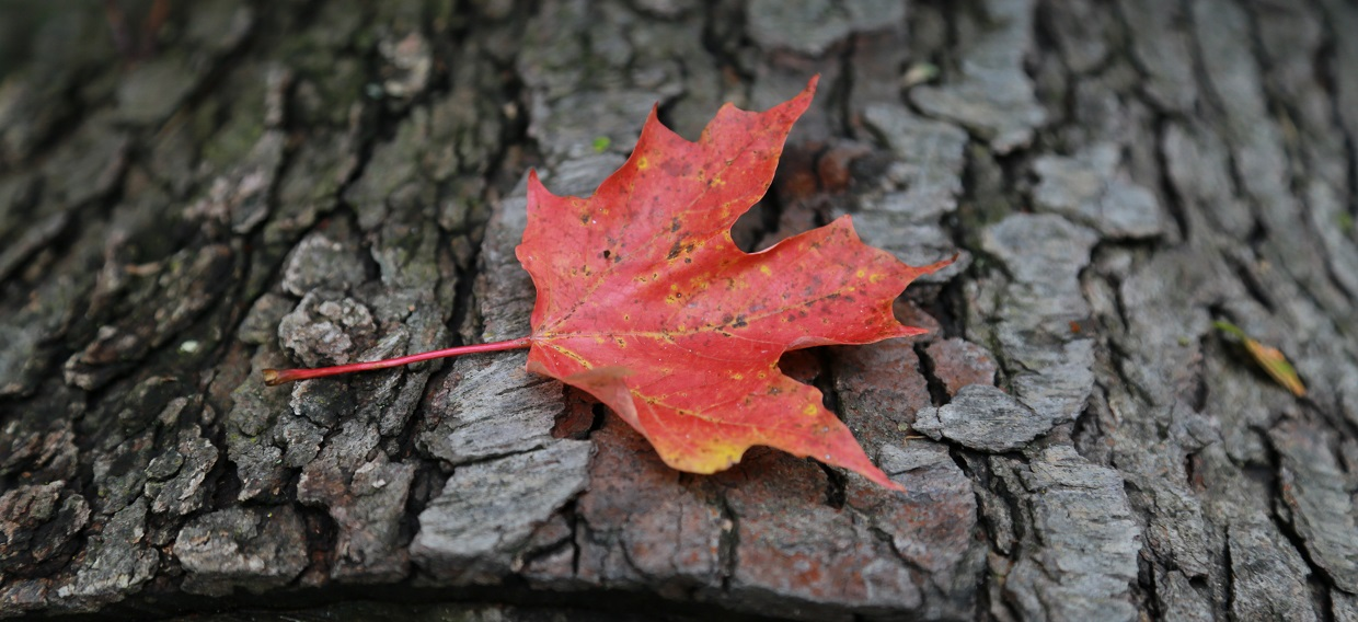 Fall Colours Celebration @ Kortright Centre for Conservation