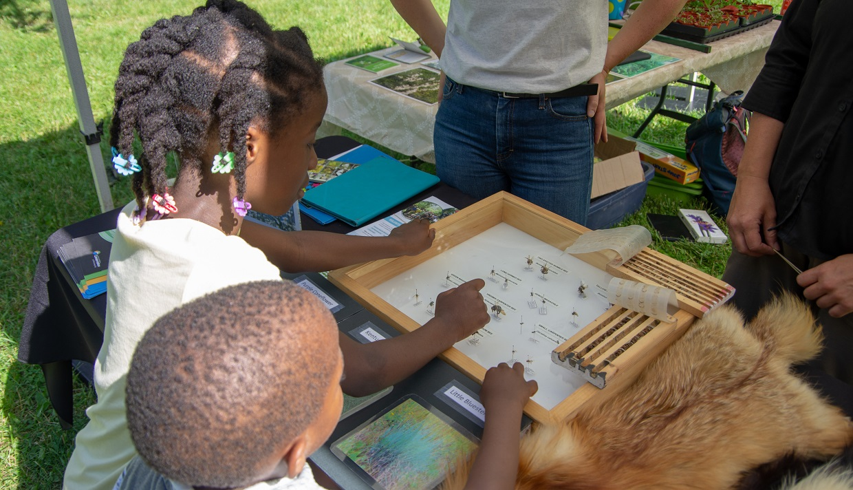 children examine nature display at Kortright Culture Days event