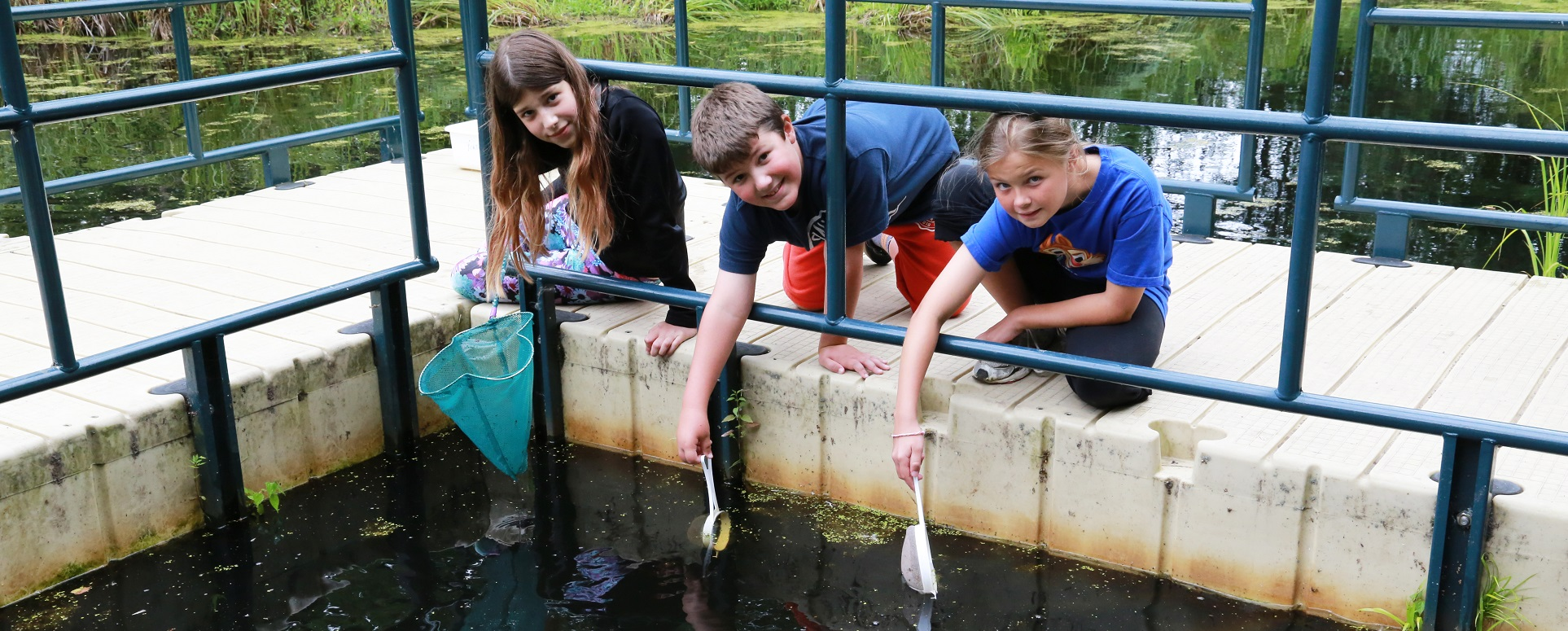 kids with dip nets search for aquatic creatures at Kortright Centre wetland area