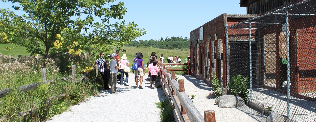 visitors to Kortright Centre explore peregrine barn