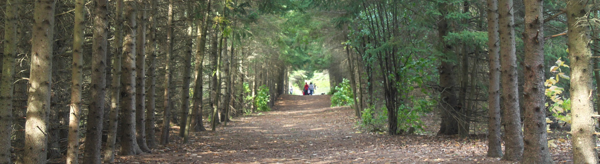 nature trail at Kortright Centre for Conservation