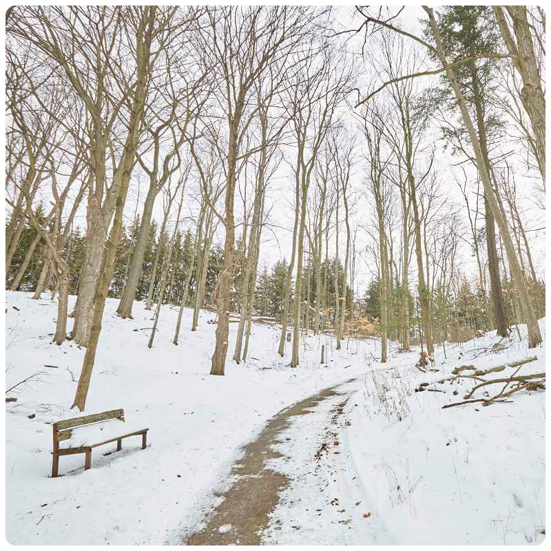 snow covered trail at Kortright Centre in winter